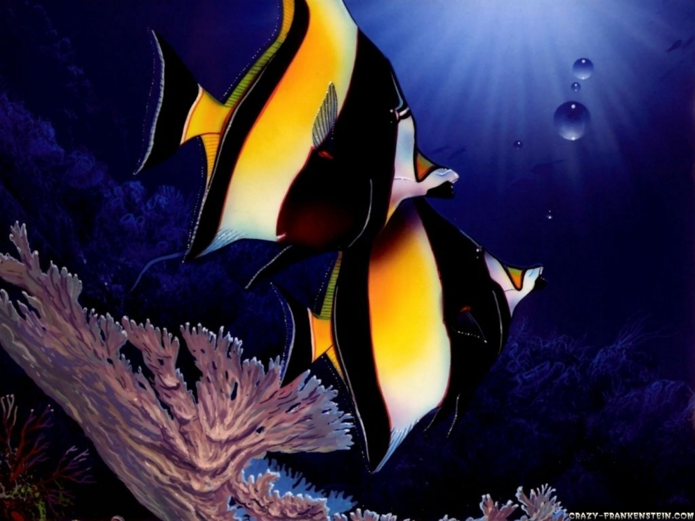 animals-under-water-fish-wallpapers-1600x1200