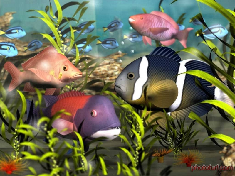 beautiful_wallpapers_hd_fish